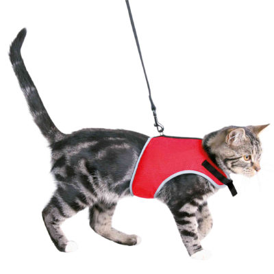 Gilet chat rouge trixie